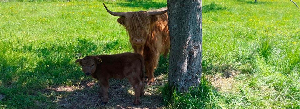 Highlanderin Berta mit Bea