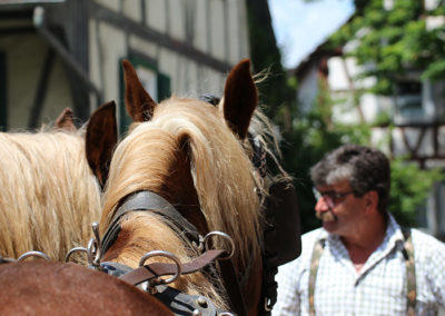 kachelofa-hoffest-kutschpferde