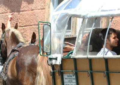 kachelofa-hoffest-pferdekutschfahrt